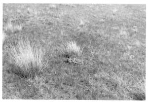 Baby antelope, Photo caption Gene Keller, 1964