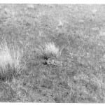 Baby antelope, Photo caption Gene Keller, 1964